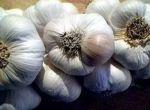 чеснок семена озимого чеснока продам оптом