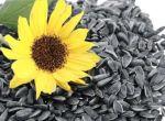 Семена подсолнуха импортной и отечественной селекции.Полтава