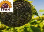 Високоякісний посівний матеріал від компанії «ГРАН»