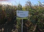Семена кукурузы ВН 6763 (ФАО 320) -10% скидки от производите