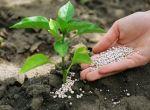 Минеральные удобрения. Азотно-фосфорные удобрения.