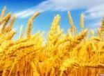База сельхозпроизводителей