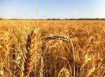 Зернові відходи. Олійні, бобові зерновідходи