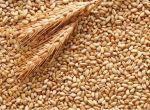 Куплю пшеницю