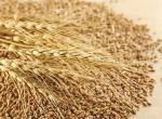 Постоянно закупаю зерноотходы зерновые, масличные, бобовые!
