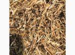 Куплю зерноотходы подсолнечника, зерноотходы рапса