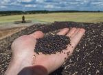 Куплю зерновідходи соняшника, зерновідходи ріпаку