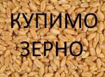 Закупляємо зернові культури по всій Україні