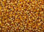 Закупка кукурузы на постоянной основе, дорого