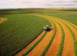 Дорого и постоянно закупаем зерновые и масличные культуры