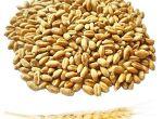 Куплю пшеницю, ячмінь нового врожаю.