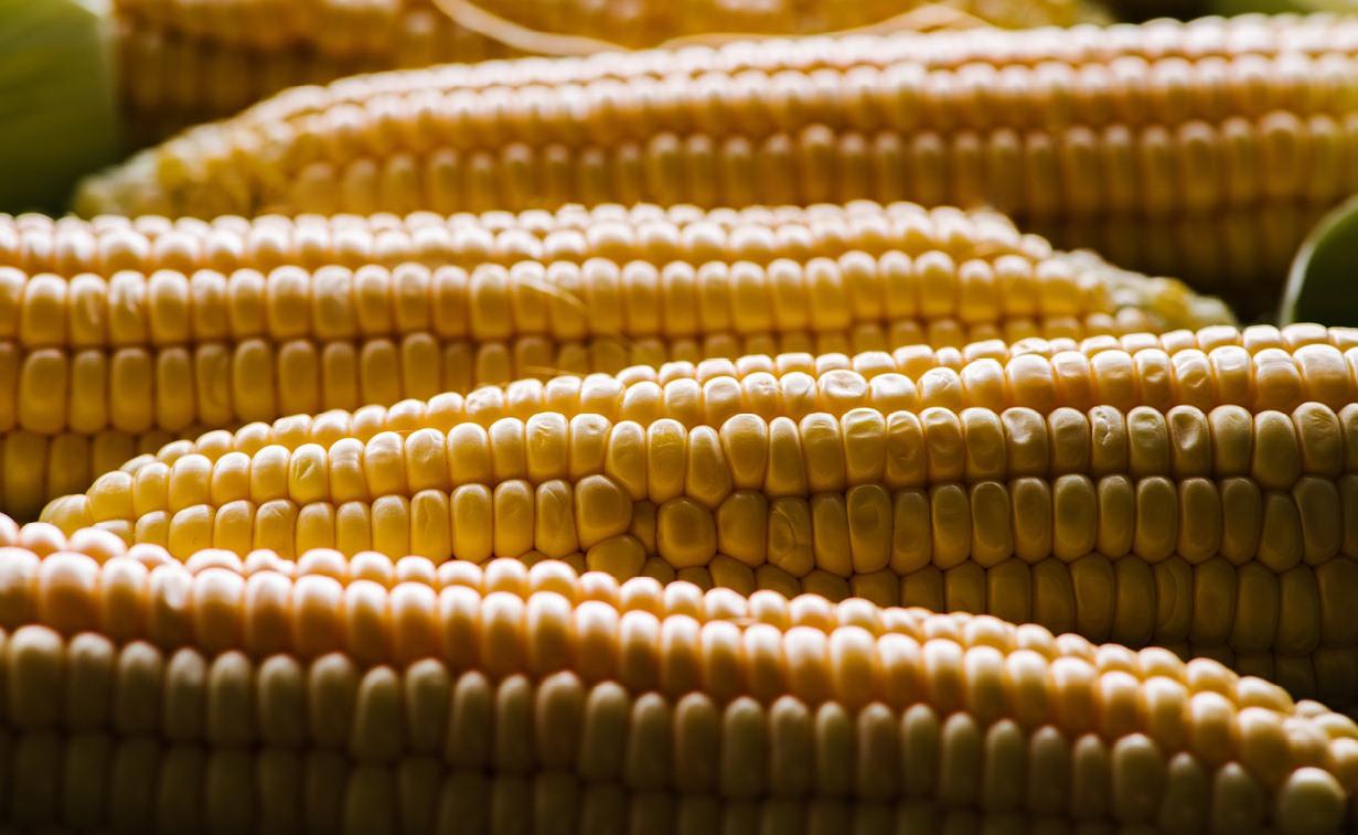 Вибір гібридів кукурудзи залежно від ґрунтово-кліматичних умов ... b716c51d4265b