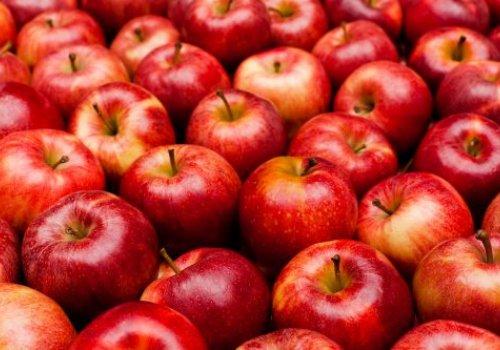 Порівняння технологій та економіки вирощування органічних та столових яблук в Україні. Де маржа?