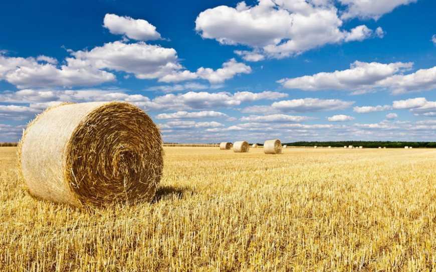 Тюковану солому та кукурудзу аграрії зможуть продати напряму через біржу fa600ae8df11c