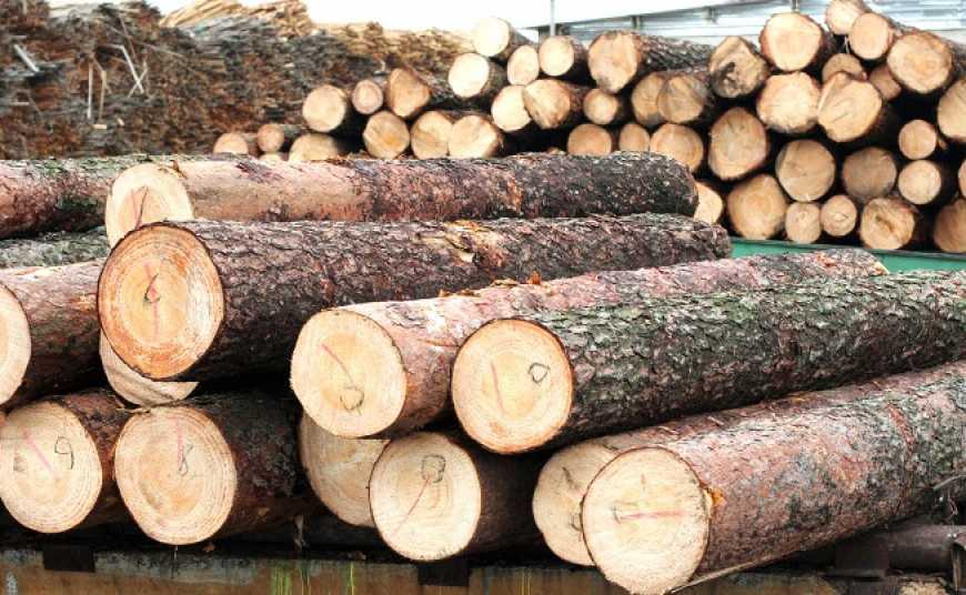 """Результат пошуку зображень за запитом СБУ перекрила схеми """"чорних лісорубів"""" у Карпатах майже на два мільйони"""""""