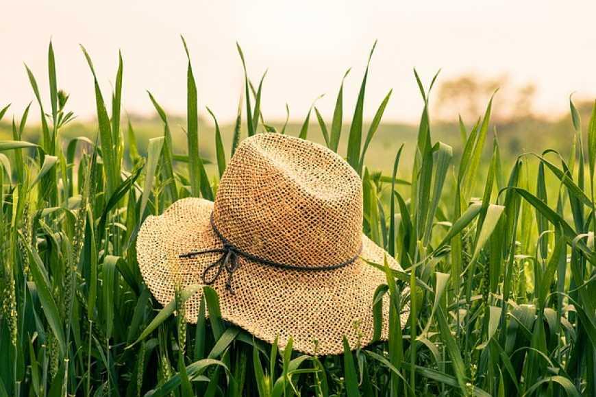 Кому житиметься краще: ФАО зробило прогноз щодо розвитку українського агросектору