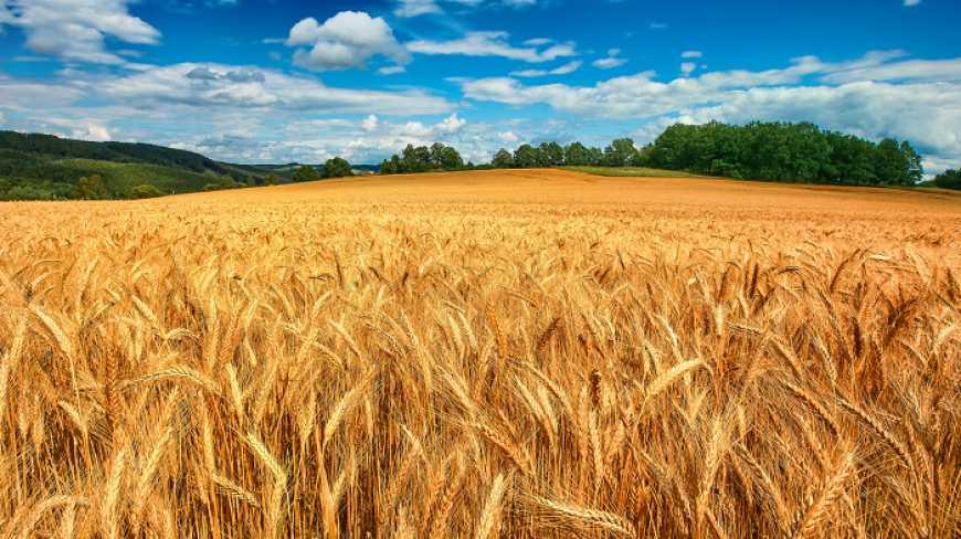 Житниця Європи: Україна увійшла до трійки головних постачальників агропродукції в ЄС